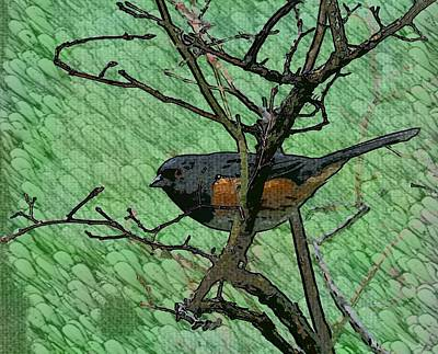 Blueberry Mixed Media - Textured Towhee by Teresa A Lang