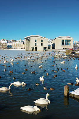 Print featuring the photograph Town Hall And Swans In Reykjavik Iceland by Matthias Hauser