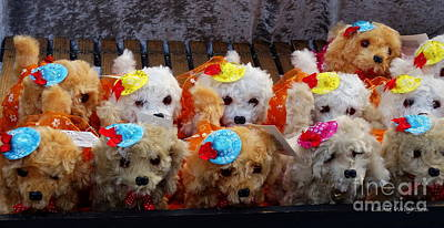 Photograph - Toy Puppy Line-up by Lainie Wrightson