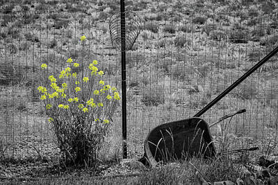 Photograph - Toy Wheelbarrow And Wild Flowers by John Brink