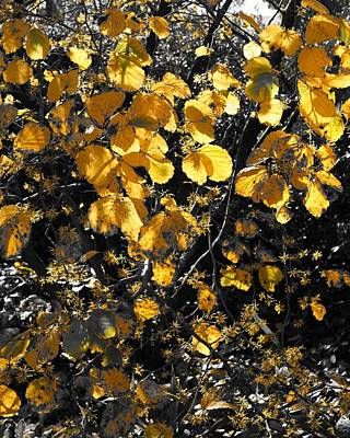 Photograph - Traces Of Yellow 2 by Rodney Lee Williams