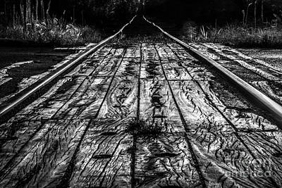 Photograph - Tracking West by Michael Arend