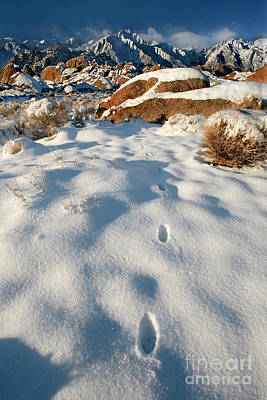 Photograph - Tracks In Snow Alabama Hills Eastern Sierras California by Dave Welling