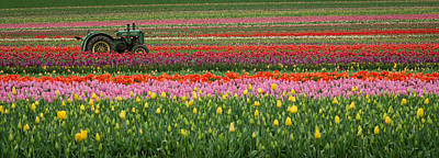 Photograph - Tractor Among The Tulips by Don Schwartz