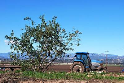 Photograph - Tractor And Tree On A Farm by Matt Harang