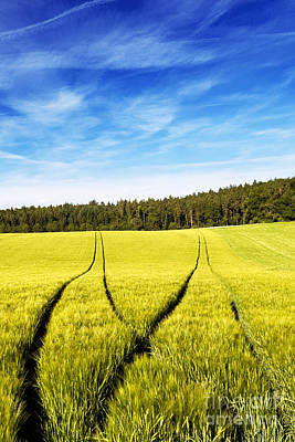 Tractor Tracks In Wheat Field Art Print by Carsten Reisinger