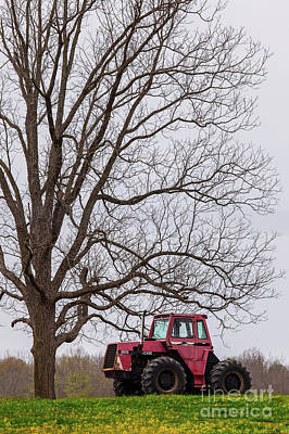 Photograph - Tractor Under A Tree by Dan Carmichael