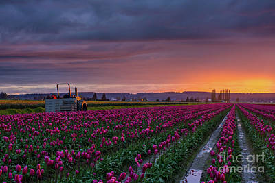 Tulip Photograph - Tractor Waits For Morning by Mike Reid