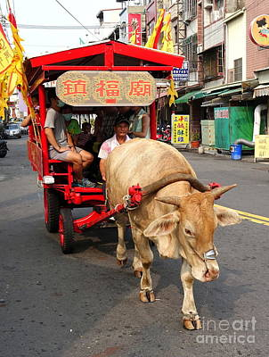 Photograph - Traditional Ox Cart Transports Touirsts by Yali Shi