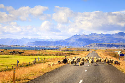Photograph - Traffic In Iceland by Alexey Stiop