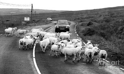 Photograph - Traffic Jam by Lexa Harpell