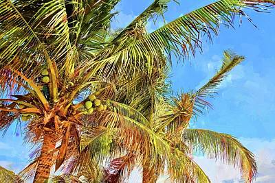 Photograph - Traigame Cocos by Alice Gipson