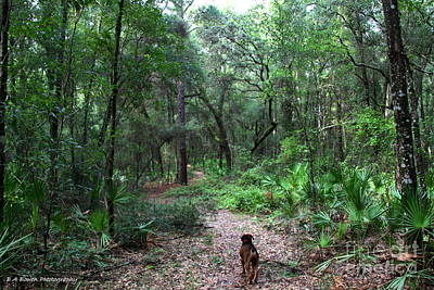 Photograph - Trail Angel by Barbara Bowen
