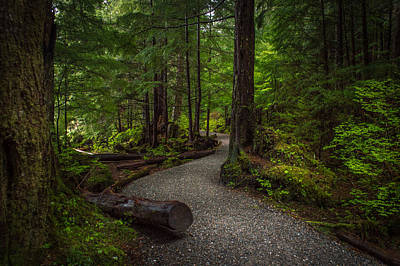 Trail Around Ward Lake Ketchikan Alaska Art Print