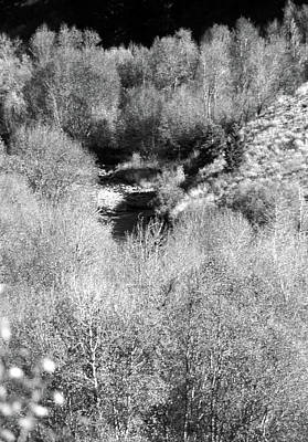 Photograph - Trail Creek Foliage by John Schneider