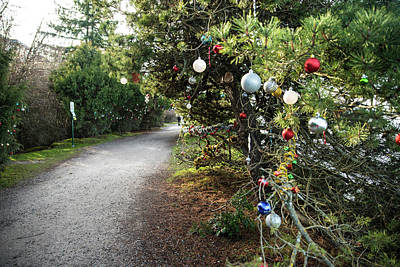 Photograph - Trail Decorations by Tom Cochran