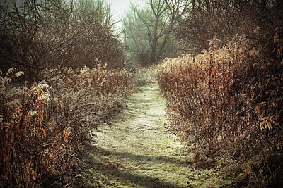 Photograph - Trail In Autumn On A Frosty Morning by Brooke T Ryan