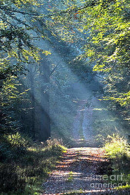Impressionism Photos - Trail in morning light by Heiko Koehrer-Wagner