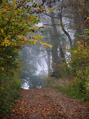 Photograph - Trail In Morning Mist by Paul Ross