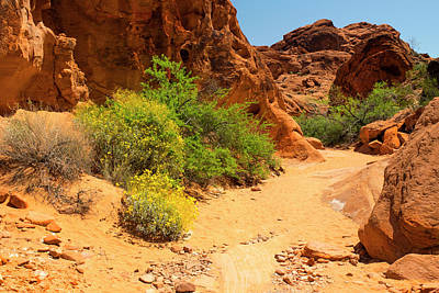Photograph - Trail In The Valley Of Fire by Frank Wilson