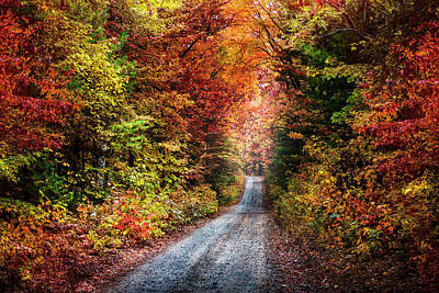 Photograph - Trail Into Autumn Colors by Debra and Dave Vanderlaan