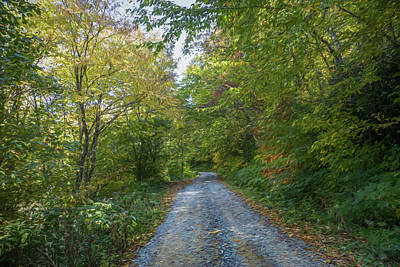 Photograph - Trail Into Spring Painting by Debra and Dave Vanderlaan
