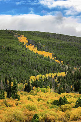 Photograph - Trail Of Aspens by Juli Ellen
