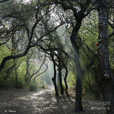 Photograph - Trail Of Light by Arik Baltinester