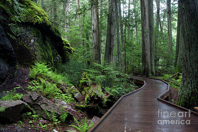Photograph - Trail Of The Cedars by Katie LaSalle-Lowery