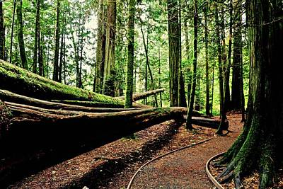 Photograph - Trail Of The Fallen Giants Of Cathedral Grove by Brian Sereda
