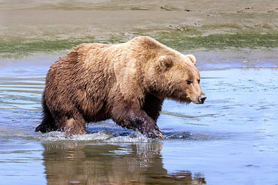 Photograph - Trail Of The Grizzly  by Jack Bell