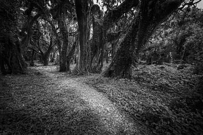 Photograph - Trail Of Trees II by Jon Glaser