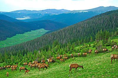 Photograph - Trail Ridge Road Panorama by Robert Meyers-Lussier