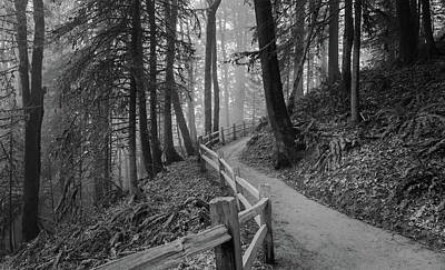 Photograph - Trail Through The Misty Forest by Don Schwartz