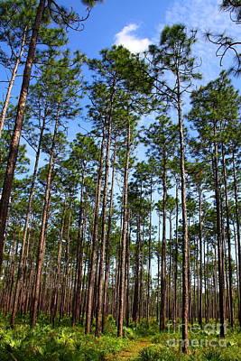 Trail Through The Pine Forest Art Print