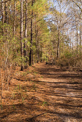 Photograph - Trail Through The Pines At Waccamaw River Park by MM Anderson