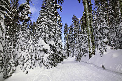 Snowed Trees Photograph - Trail Through Trees by Garry Gay