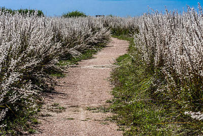 Photograph - Trail Thru The White Fluff by Debra Martz