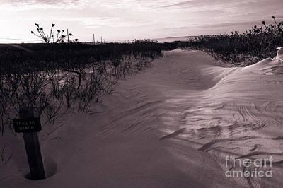 Gay Interest Photograph - Trail To Beach, Martha's Vineyard, Ma by Karyn Regal