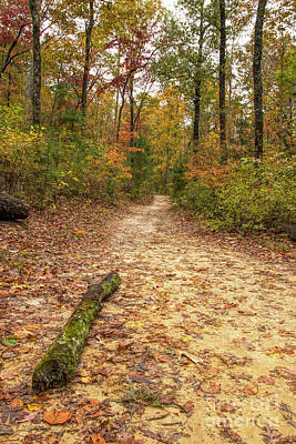 Photograph - Trail To Benton Falls by Barbara Bowen
