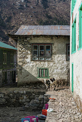 Photograph - Trail To Everest - Cow In Phakding Nepal by Mike Reid