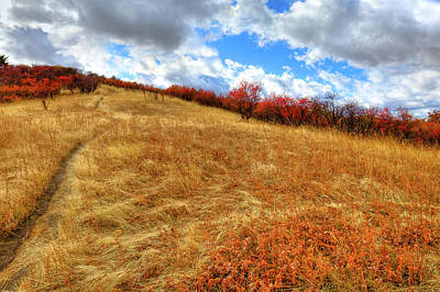 Photograph - Trail To The Top Of Magpie Forest by David Patterson