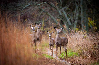 Photograph - Trail Watchers by Jeff Phillippi