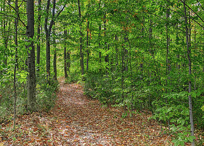 Photograph - Trailhead by John M Bailey