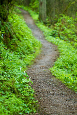 Photograph - Trails Of The Forest by Kunal Mehra