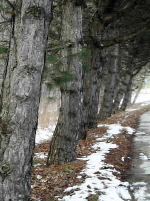 Photograph - Trailside Trees by Cyryn Fyrcyd