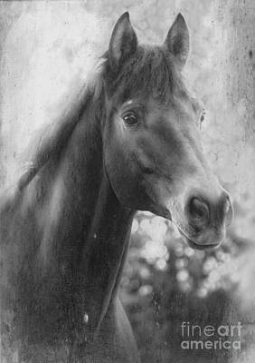 Shower Head Mixed Media - Trakehner by Clare Bevan