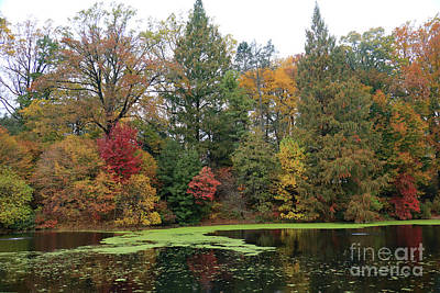 Photograph - Tranquil Autumn Pond by Mary Haber