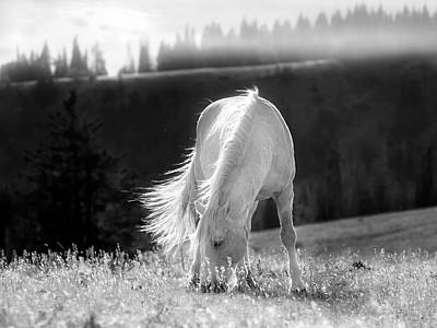Art Print featuring the photograph Tranquil Black And White 3 by Leland D Howard