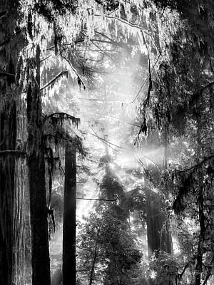 Photograph - Tranquil Black And White 4 by Leland D Howard